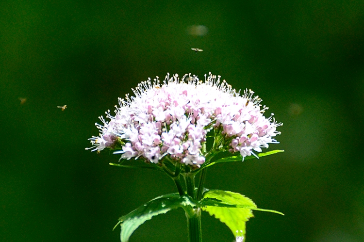 insect with wild flower