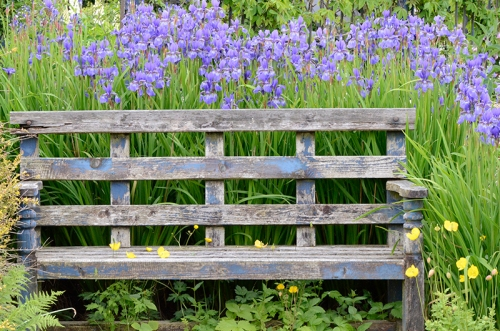 bench with irises