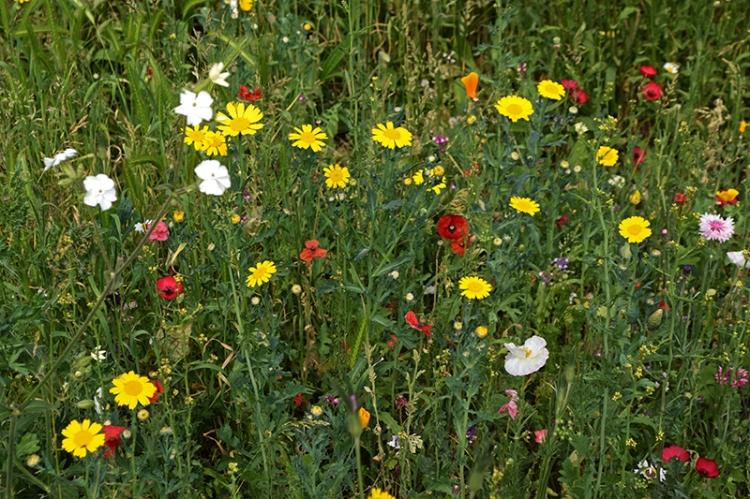 Brixton meadow