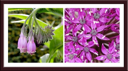 comfrey and allium