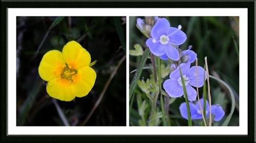 moorland wildflowers