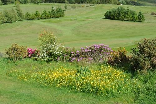 Golf colour