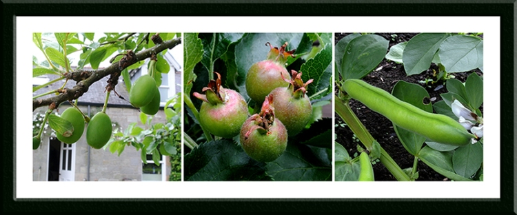 apple, bean and plum