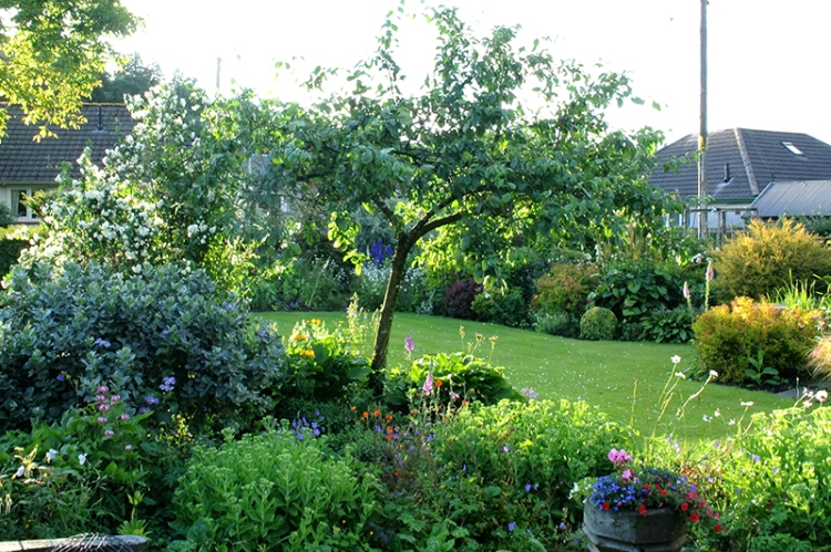 garden in evening