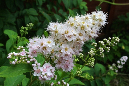 Clare's plant