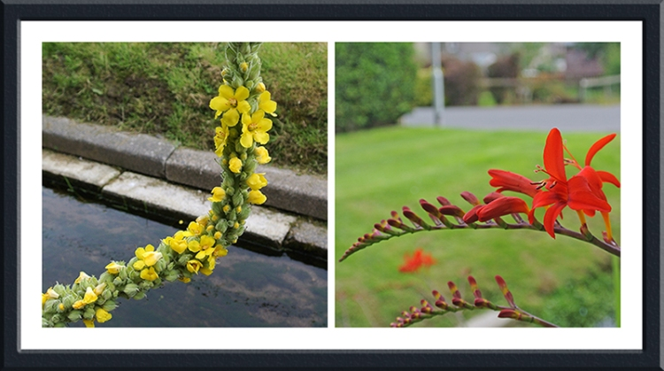 bending flowers