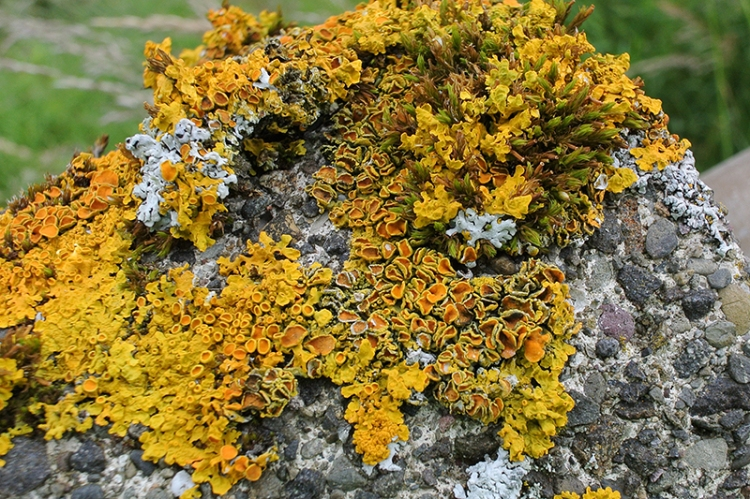 lichen on concrete
