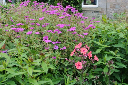 phlox and geranium