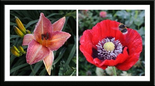 day lily and poppy