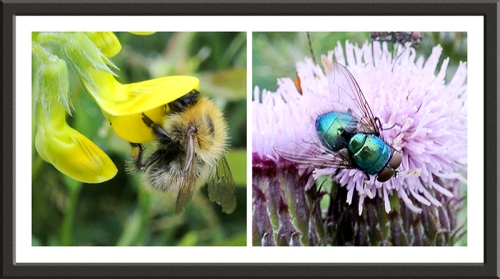 wildflowers with insects