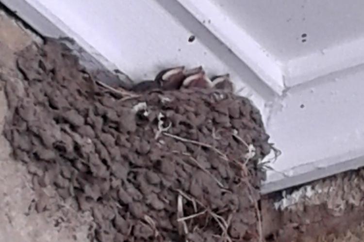 Health centre birds nest