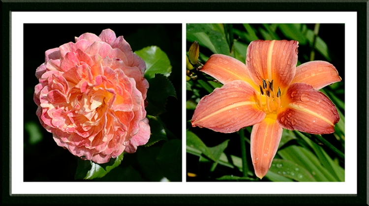Special Grandma and a day lily