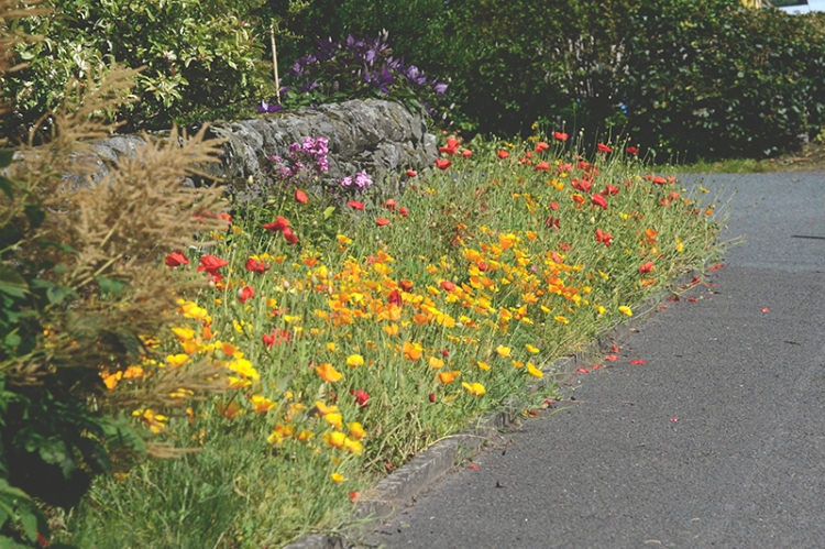Rowanburn flowers