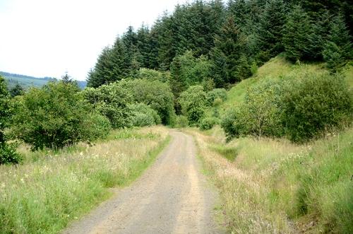 Kershop forest