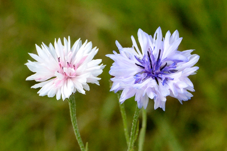 wild flowers on the front  lawn