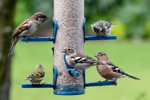 various birds on the feeder