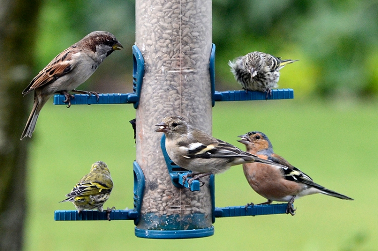 various birds on the feeder