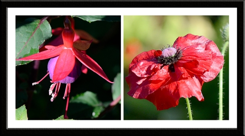 fuchsia and poppy