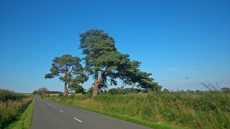 KPF trees