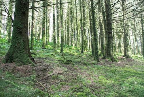 Bessie's hill