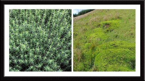 Bessie's hill nature