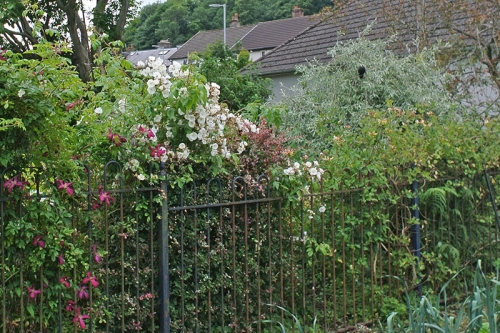 clematis and Bobbie James