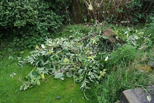 heap of branches