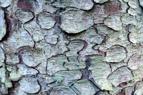 bark art