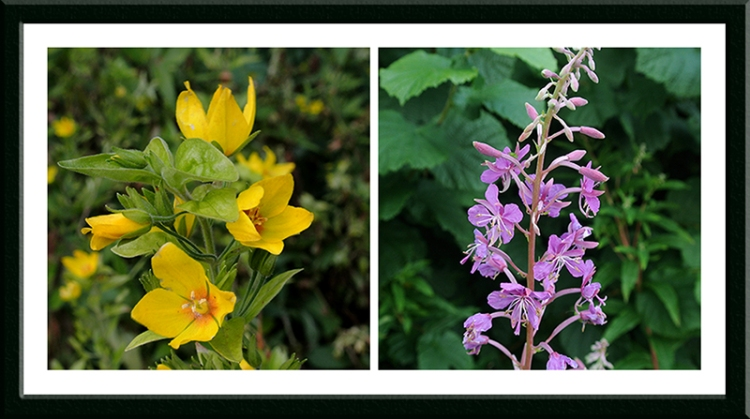 musk and willow herb