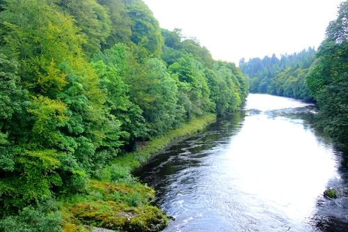 River esk trees