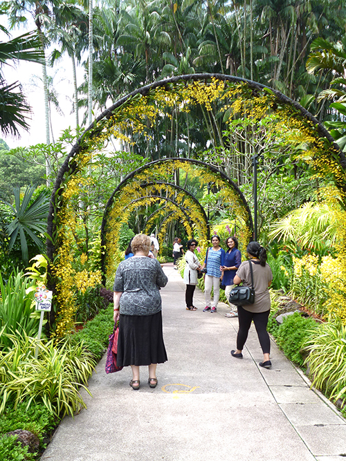 orchids in the Botanical Gardens in Singapore
