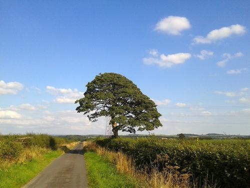 Tree and pylon