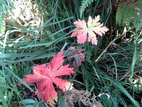 autumn colour