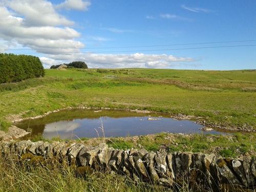 pond on wauchope road