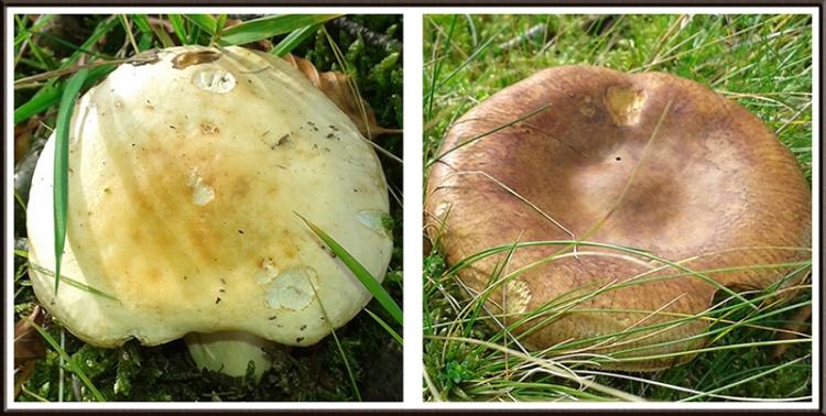 fungus at barngliesh