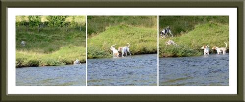 Benty hound trail