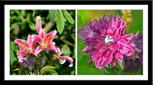Lily and clematis