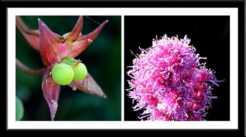 nasturtium and astilbe