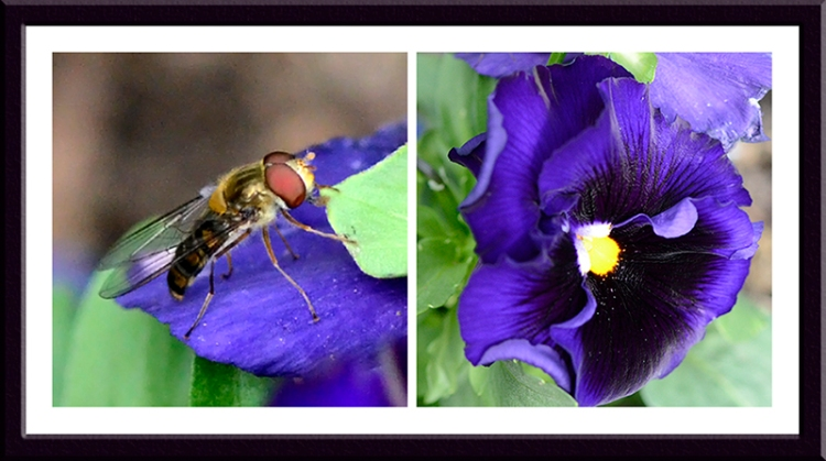insect and pansy