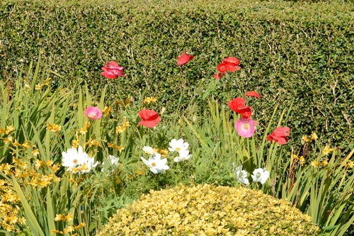 poppies, cosmos and crocosmia