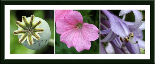 poppy, geranium and hosta