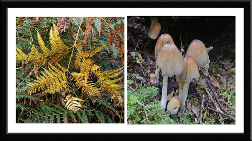 bracken and fungus