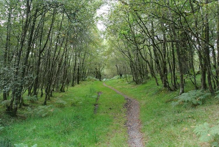 birch wood Jenny Noble's