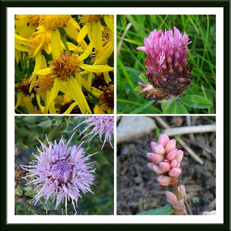 wild flowers on meikleholm