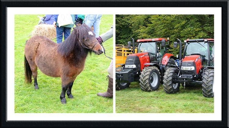 pony and tractors