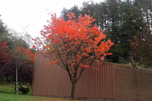 Whitshiels tree