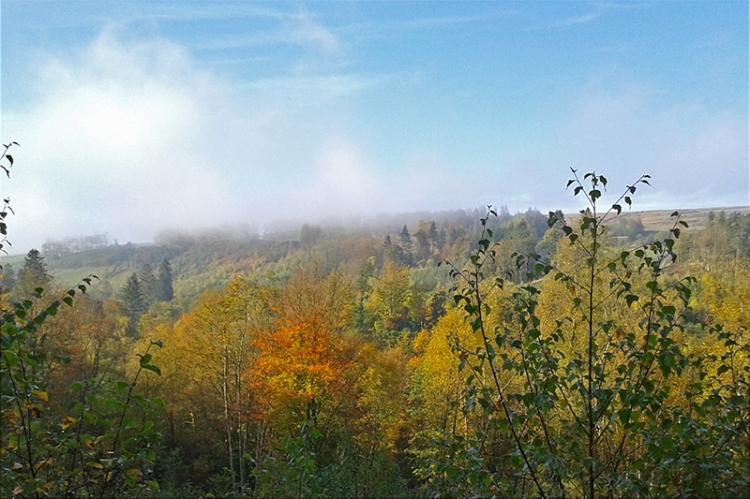 Mist over Broomholm