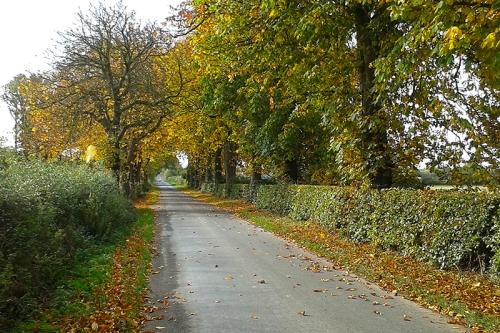 Chestnut trees in autumn