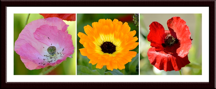 poppies and marigold