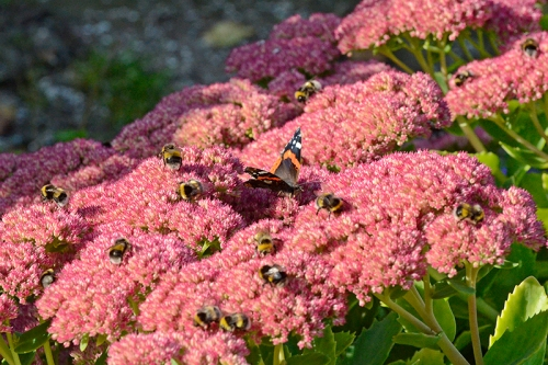 bees and butterfly